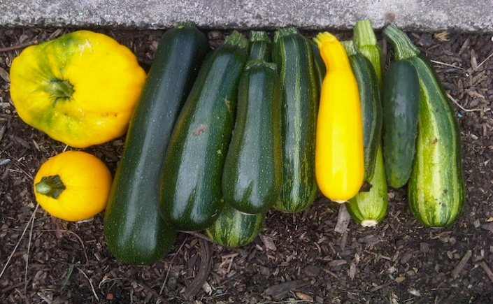 Courgettes and squash